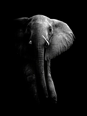 Buy this art print titled Elephant! by the artist WildPhotoArt