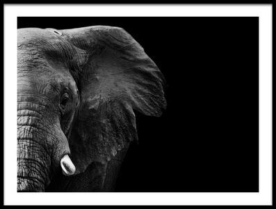 Art print titled Elephant by the artist WildPhotoArt
