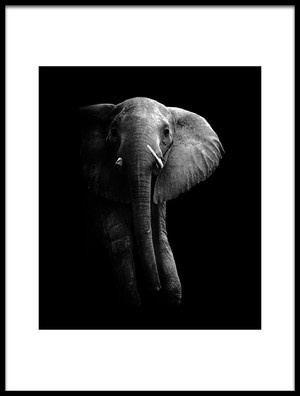 Buy this art print titled Elephant by the artist WildPhotoArt