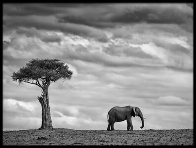 Buy this art print titled Elephant Landscape by the artist Mario Moreno