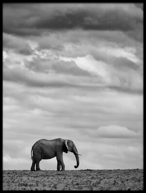 Art print titled Elephant Landscape II by the artist Mario Moreno