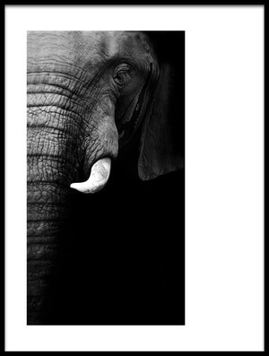 Buy this art print titled Elephant Portrait by the artist WildPhotoArt