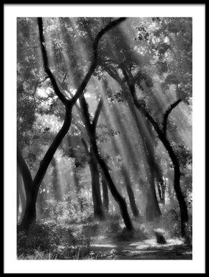Art print titled Enchanted Forest  by the artist Yvette Depaepe