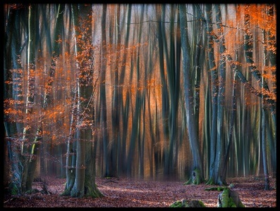 Art print titled Enchanted Forest by the artist EM-Photographies