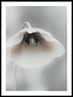 Buy this art print titled Ephemeral Beauty by the artist Piet Flour