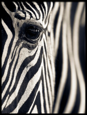 Buy this art print titled Eye & Stripes by the artist Mario Moreno