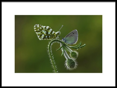 Buy this art print titled Face to Face by the artist Savas Sener