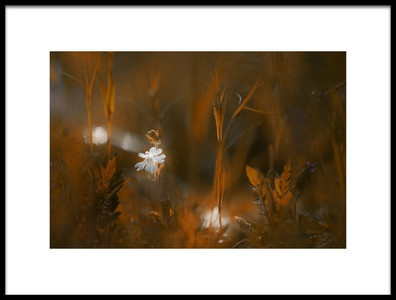 Art print titled Fairy Lights by the artist Steve Moore