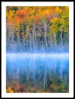 Art print titled Fall Color by the artist Yimei Sun