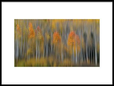 Art print titled Fall Impression 2 by the artist 李从军 / Austin Li