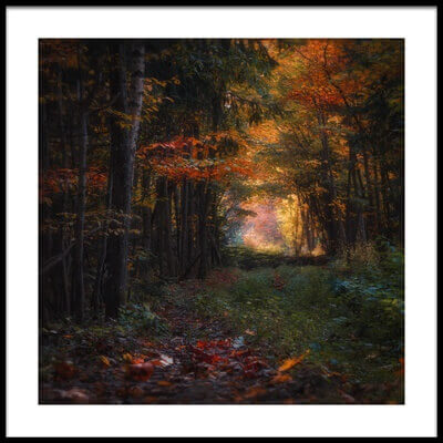 Buy this art print titled Fall In the Woods by the artist Sergei Shabunevich