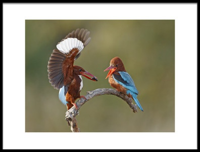 Art print titled Feeding the Spouse by the artist Shlomo Waldmann
