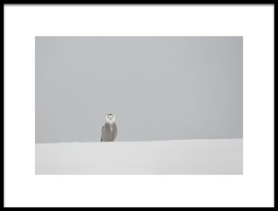 Art print titled Feel Lonely by the artist Jim Luo