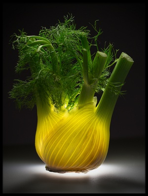 Art print titled Fennel by the artist Wieteke de Kogel