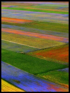 Art print titled Fields of Color by the artist Massimo Della Latta
