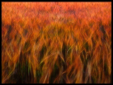 Buy this art print titled Fire Fields by the artist Piotr Krol (Bax)