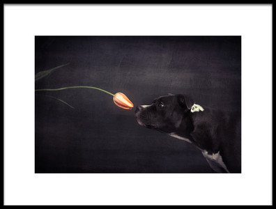 Buy this art print titled First Approach  Hildegard and the Tulip by the artist Heike Willers