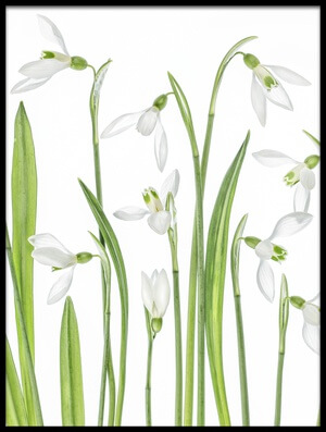 Buy this art print titled First Snowdrops III by the artist Mandy Disher