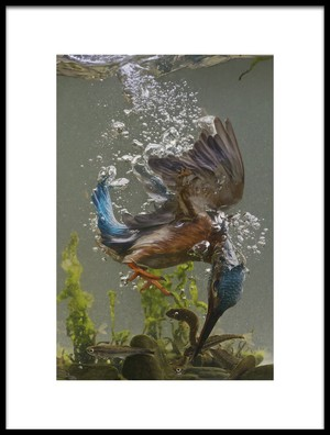 Art print titled Fisherman by the artist Ray Cooper