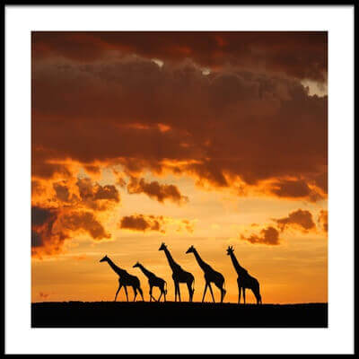 Art print titled Five Giraffes by the artist Muriel Vekemans