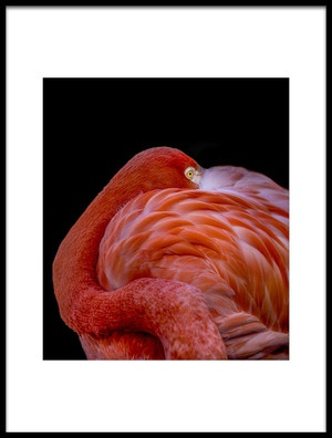 Buy this art print titled Flamingo by the artist Chris Coenders