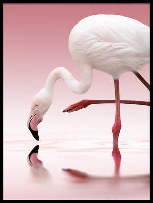 Buy this art print titled Flamingo by the artist Doris Reindl