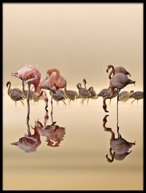 Buy this art print titled Flamingos by the artist NASSER OSMAN
