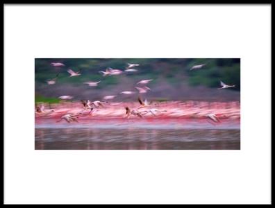 Art print titled Flamingos In Dawn by the artist David Hua