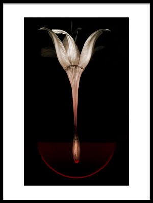 Art print titled Floating Lily by the artist Johan Lilja