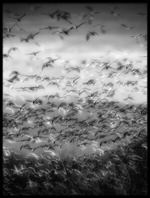 Buy this art print titled Flock of Birds by the artist YC Tian