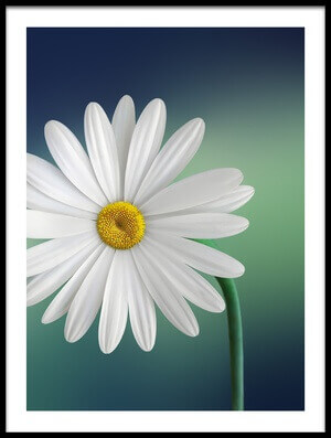 Buy this art print titled Flower by the artist Bess Hamiti