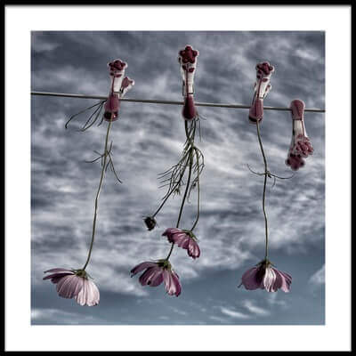 Art print titled Flowers Never Get Tired of a Blue Sky by the artist Yvette Depaepe