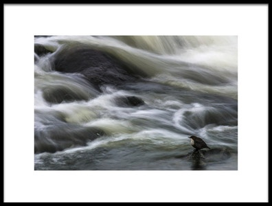Buy this art print titled Flowing Contemplation by the artist Arne Östlund