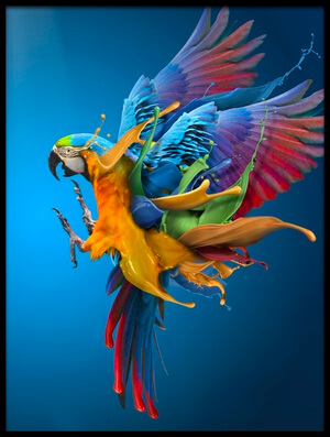 Art print titled Flying Colours by the artist sulaiman almawash