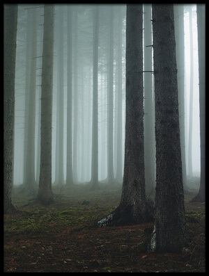 Buy this art print titled Foggy Forest by the artist David Charouz