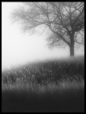 Buy this art print titled Foggy Morning by the artist Marc Huybrighs