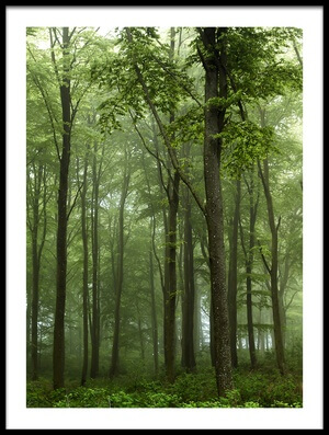 Buy this art print titled Forest by the artist Leif Løndal