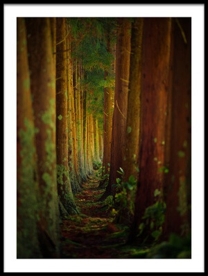 Art print titled Forest by the artist Rui Caria