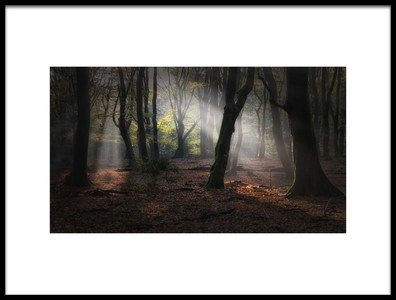 Art print titled Forest of Dancing Trees by the artist Saskia Dingemans