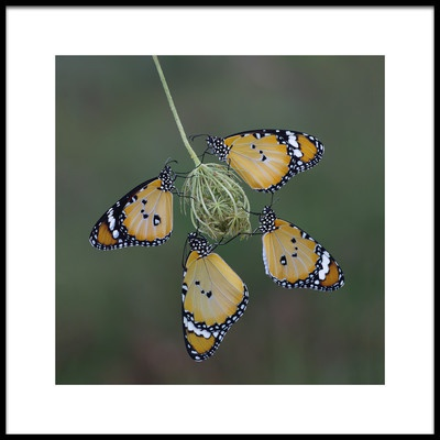 Art print titled Four of a Kind by the artist Savas Sener