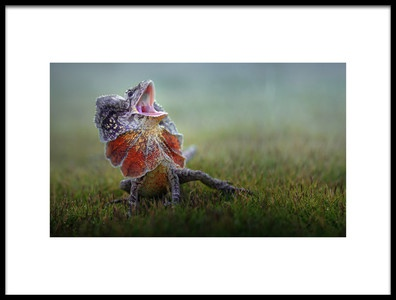 Art print titled Frilled Dragon by the artist Fahmi Bhs