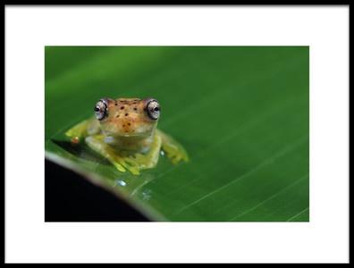 Art print titled Frog Eyes by the artist Nicolás Merino