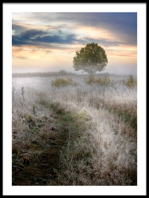 Art print titled Frosty Morning by the artist Kirill Volkov