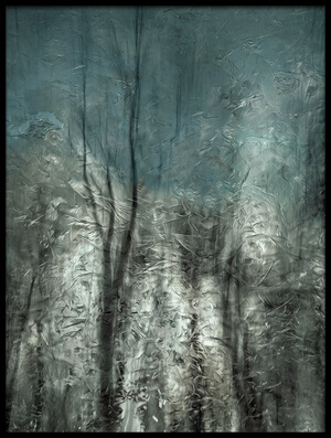 Art print titled Frozen Frost Wood by the artist Gilbert Claes