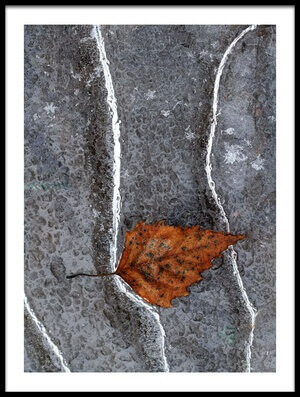 Art print titled Frozen Leaf by the artist bertrand kulik