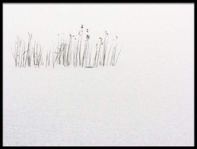Art print titled Frozen Life by the artist Stefano Scappazzoni
