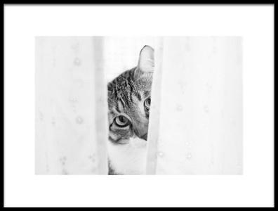 Art print titled Funny Cat by the artist Oranit Turgeman