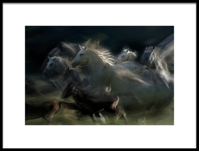 Art print titled Gallop by the artist milan malovrh