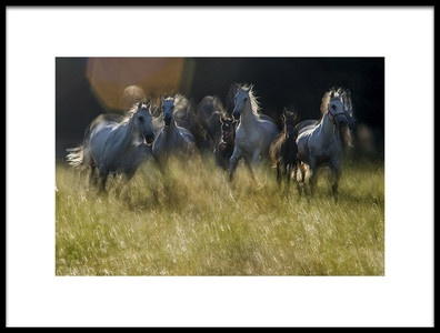 Art print titled Gallop Across the Meadow by the artist milan malovrh