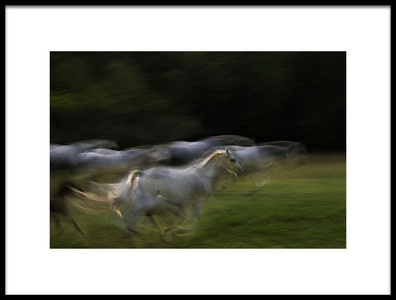 Art print titled Galloping by the artist milan malovrh